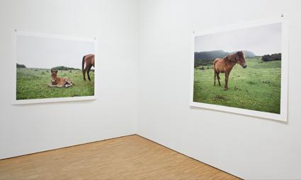 Charlotte Dumas – tentoonstellingsfoto's (2015)